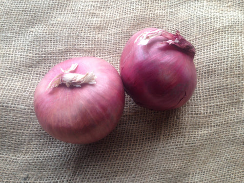 Onions - Red - Central Oregon
