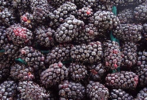 Marionberries - Frozen