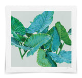 Alocasia No.1 / Canvas