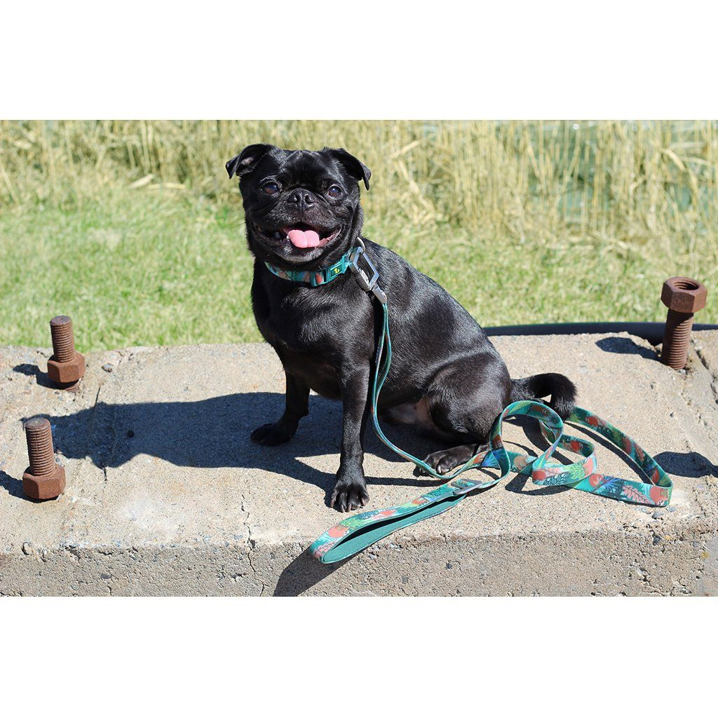 Be One Breed Silicone Leash Lazy Buddies  Leashes - PetMax