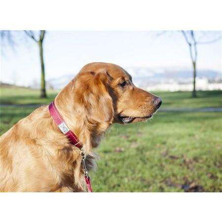 RC Dog Adjustable Collar Primary Red