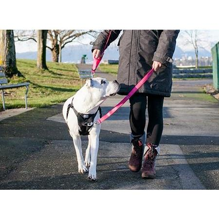 Canine Equipment Beyond Control Leash Raspberry  Leashes - PetMax