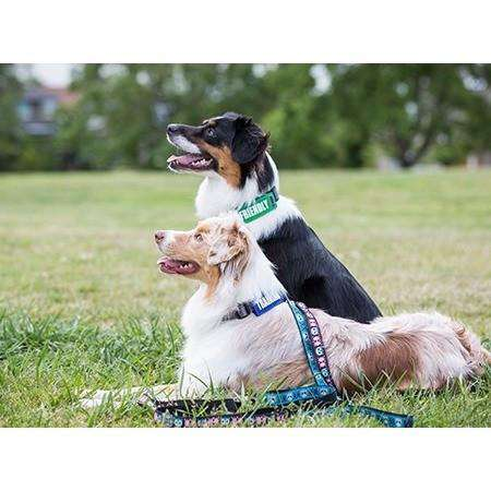 "Canine Friendly Bark Notes ""Blind"", Dog Training Products, RC Pet Products - PetMax Canada"