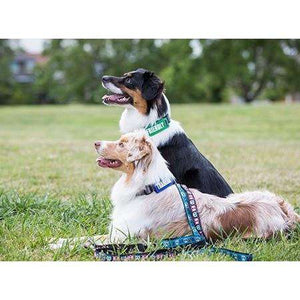 "Canine Friendly Bark Notes ""Friendly"" 