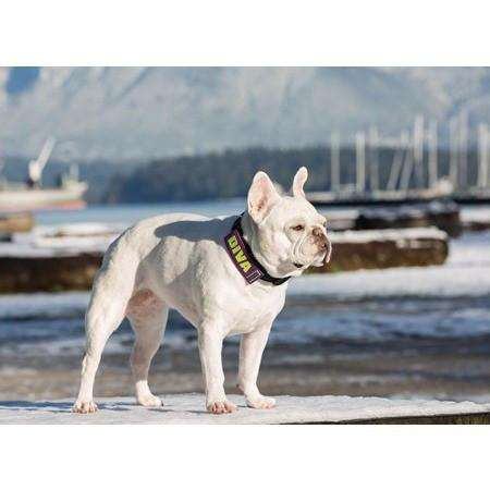 "Canine Friendly Bark Notes ""Working"", Dog Training Products, RC Pet Products - PetMax Canada"