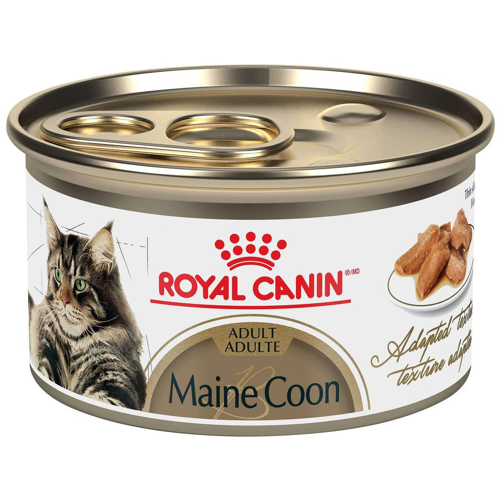 Royal Canin Maine Coon Canned Cat Food  Canned Cat Food - PetMax
