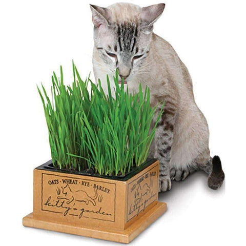 Smart Cat Kittys Garden, Cat Treats, Smart Cat - PetMax
