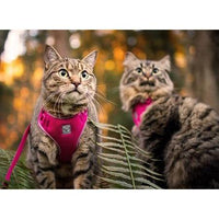 RC Kitty Adventure Harness Black | Cat Harness -  pet-max.myshopify.com