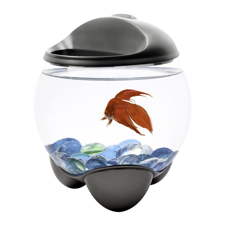 Tetra Betta Bubble Bowl Aquarium Kit 0.5 Gallons Aquarium [variant_title] [option1] - PetMax.ca