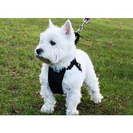 Canine Equipment No Pull Harness  Harnesses - PetMax