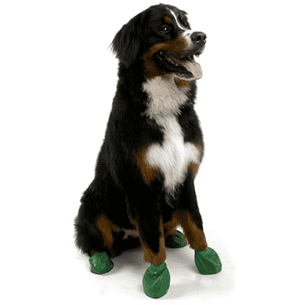 Pawz Dog Boots Green / X-Large Dog Clothing - PetMax