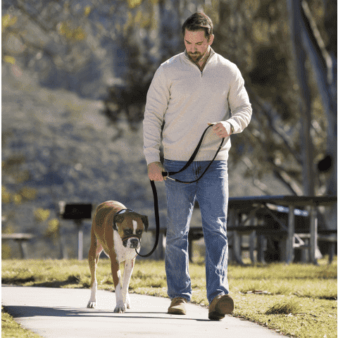 Halti Optifit Headcollar  Training Products - PetMax