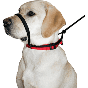 Sporn Head Halter | Training Products -  pet-max.myshopify.com