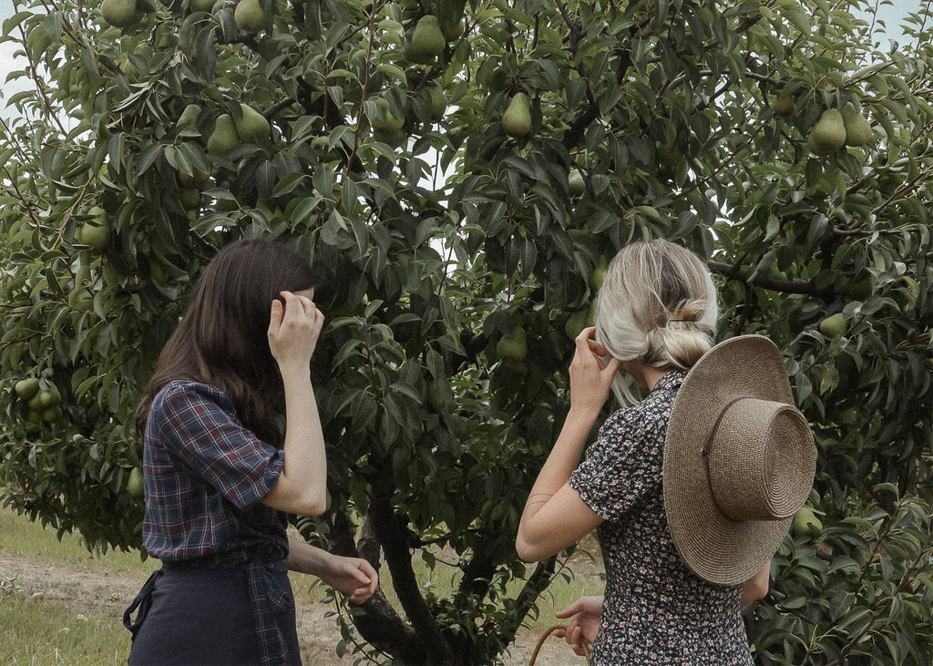 A Life Adored / Album / Picking Pears on Sauvie Island