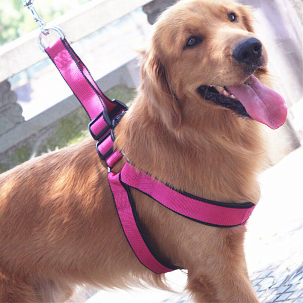 Harness and Matching Leash for Medium and Large Dogs
