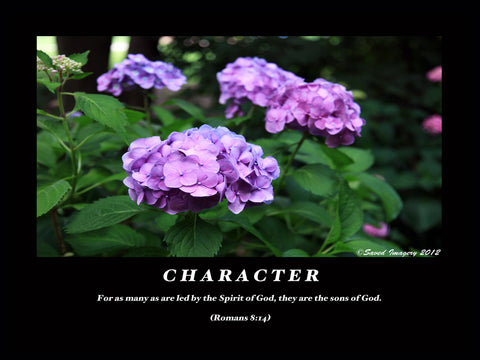 "Inspirational Photo ""Character"""