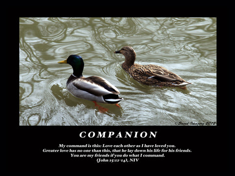 "Inspirational Photo ""Companion"""
