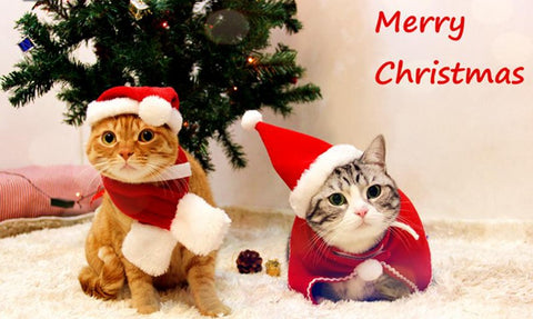 cute christmas cat hat and neckerchief cats love life - Merry Christmas Cat