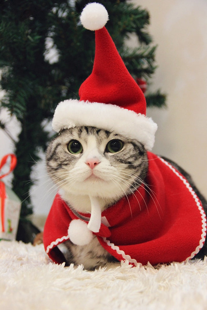 Cute Christmas Cat Hat And Neckerchief – Cats Love Life