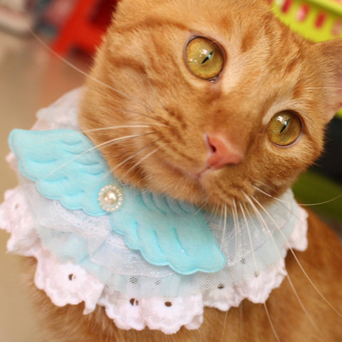 Angel Wing Lace Pet  Cat Collar - Cats Love Life