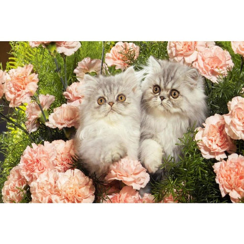Flowers And Cats Canvas Fabric Cloth Poster Or Custom Print Your Cat - Cats Love Life
