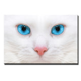 Blue Eyed White Kitty Printed Oil Painting On Canvas Unframed - Cats Love Life