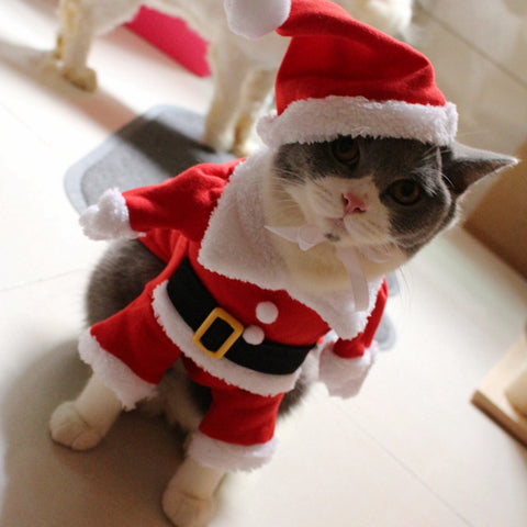 Christmas Cat Santa Costume - Cats Love Life