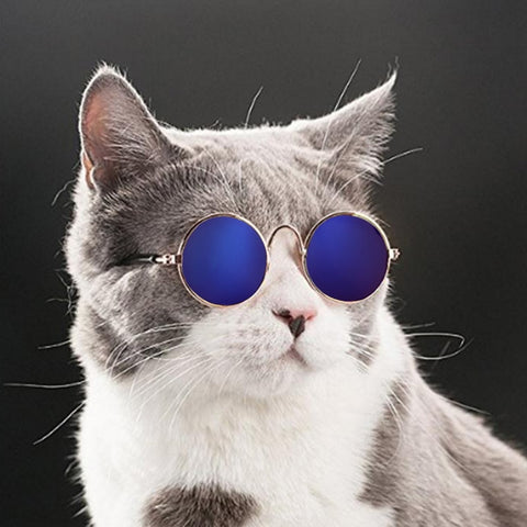 Cool Cat Sunglasses Glasses In Four Colors