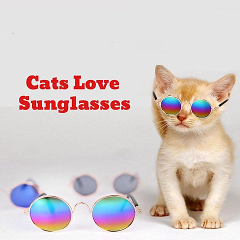 Cool Cat Sunglasses For Your Cat