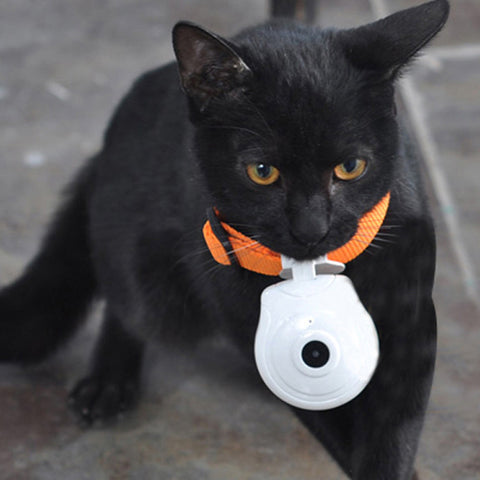 Cat Video Camera Recorder Collar - Cats Love Life