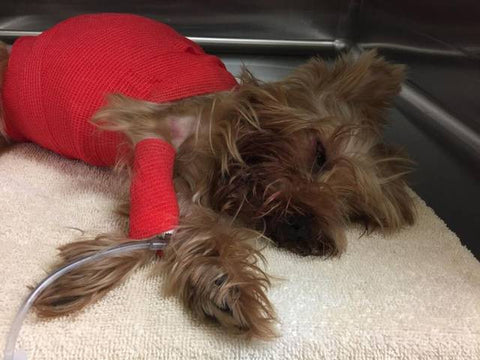 Man charged with beating Yorkie to death, cops say