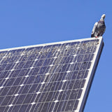 Pigeon poo on solar panel