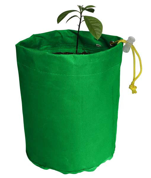 Avocado Grow Bag