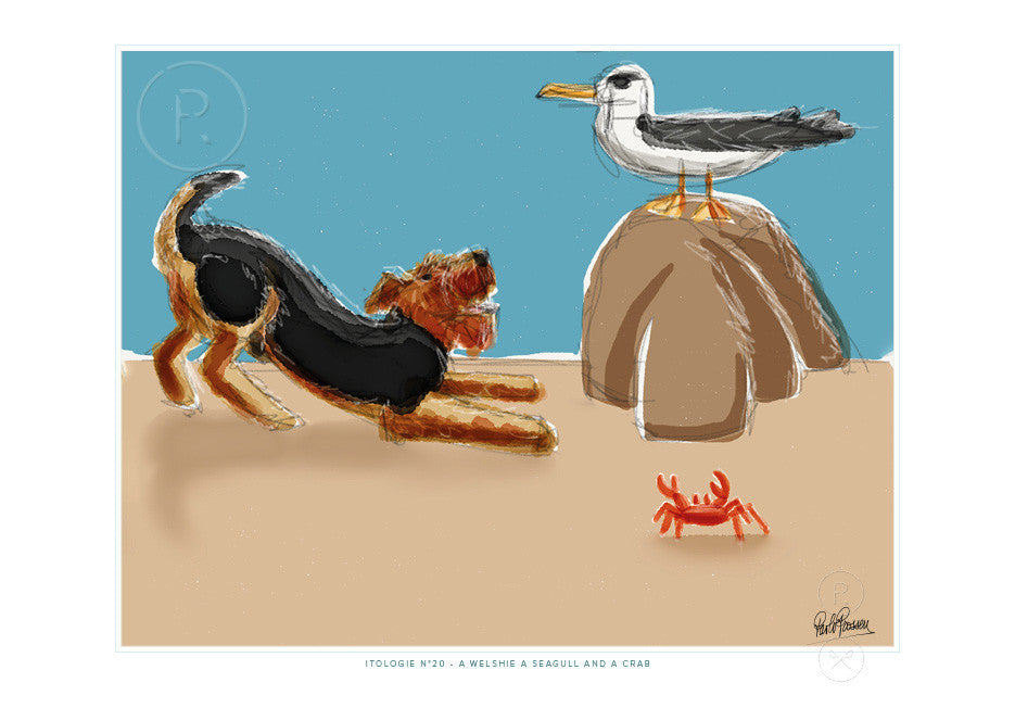 A WELSHIE A SEAGULL AND A CRAB