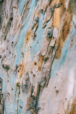 Rough surface of colorful tree trunk