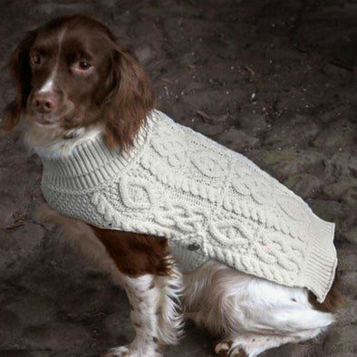 Brown Dog Wearing Natural White Irish Sweater Coat