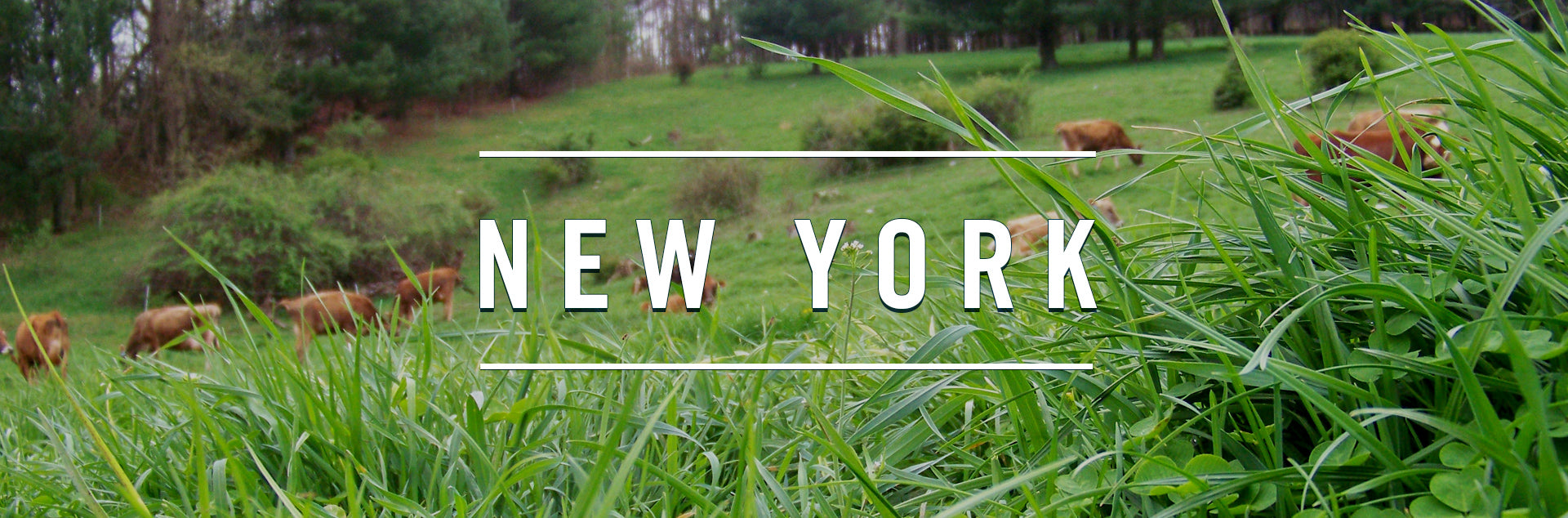 New York Farm
