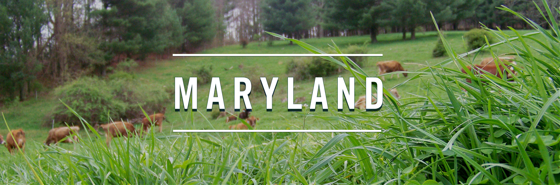 Maryland cheese making farms