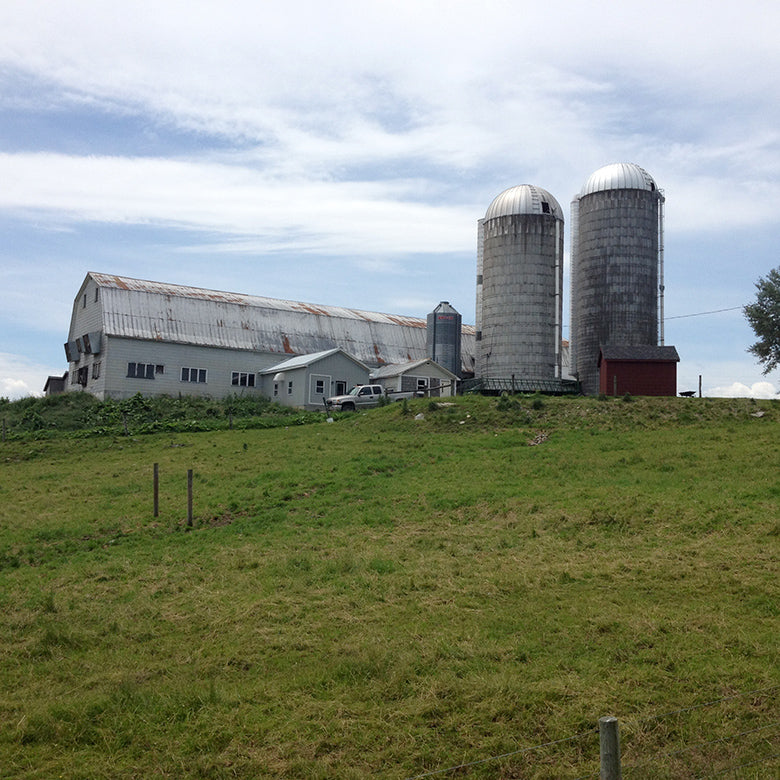 Dairy barn and two grain silos at Scholten Family Farm