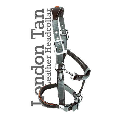 KM Elite London Tan Headcollar