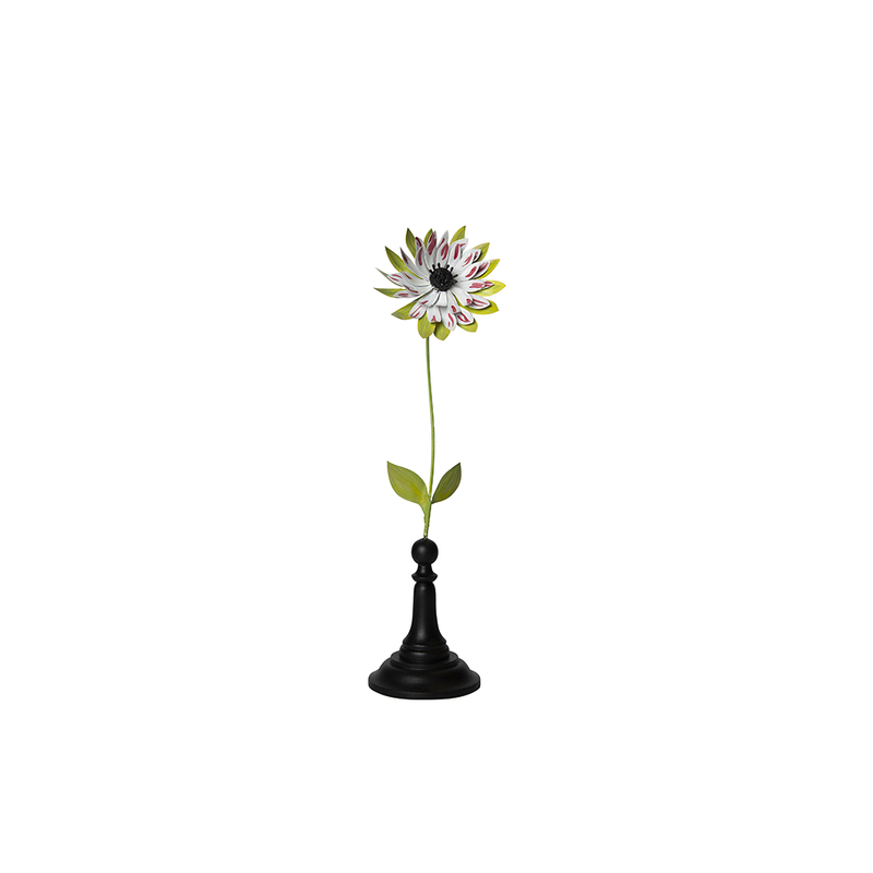 Big White Bordeaux Green Anemone