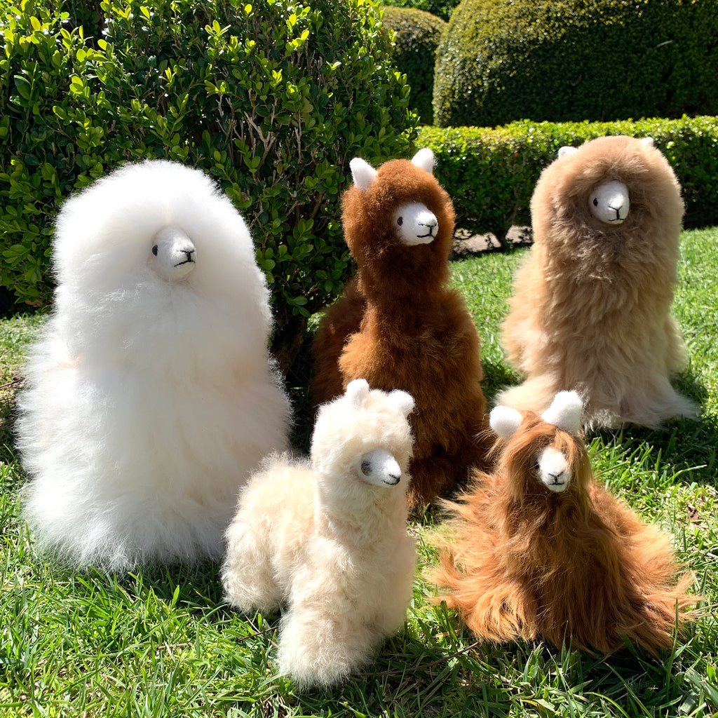Alpaca Wool Llama Fair Trade