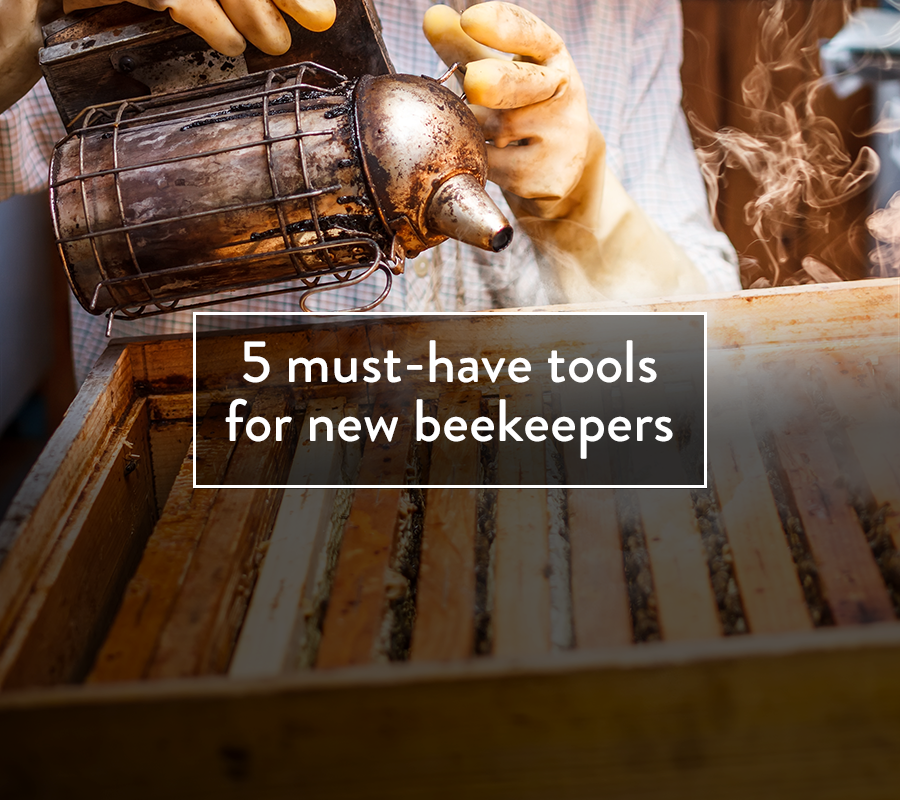 5 must-have tools for new beekeepers