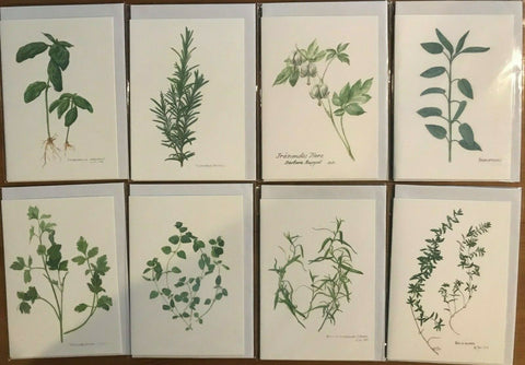 Beautiful set of 8 8ards of Herbs Imported from Germany - CC138