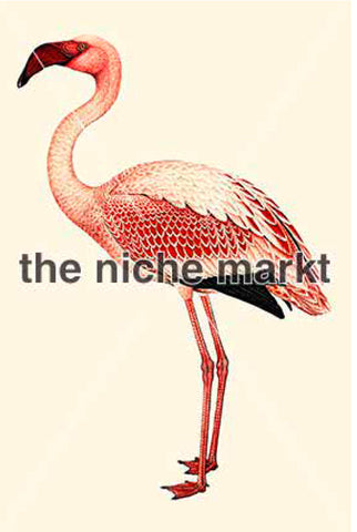 Greeting card with flamingo