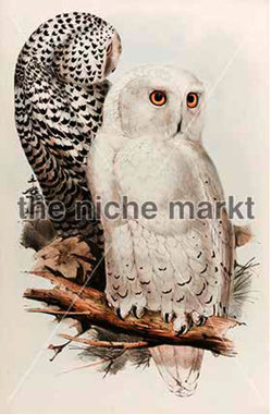 Greeting card with white owl