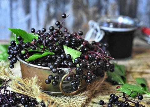 Use Elderberry to boost immune support