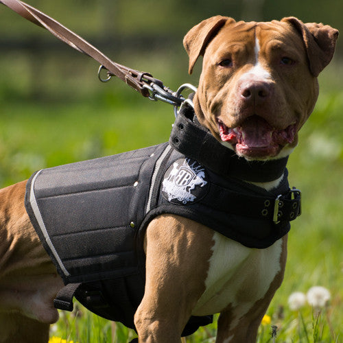 Canine Weight Vests