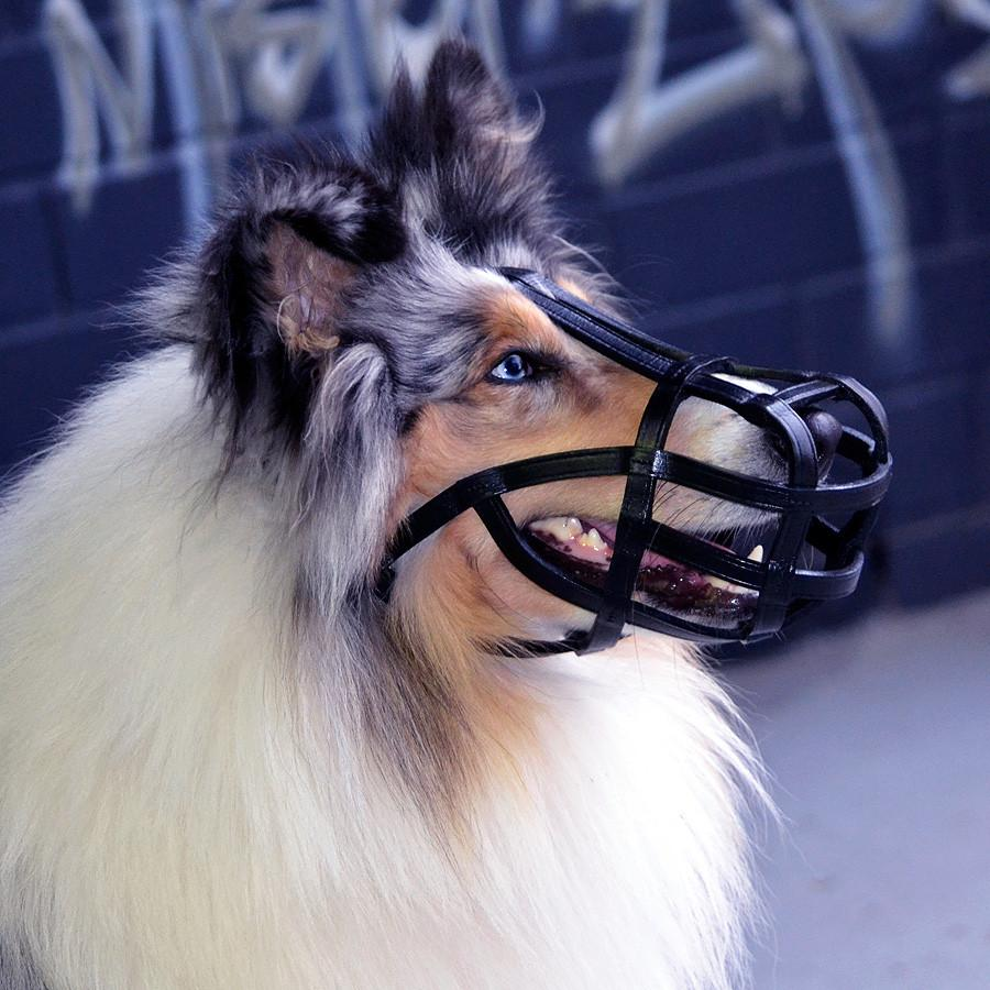 Muzzle - Leather Basket