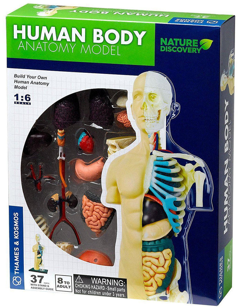 Thames & Kosmos Human Body Anatomy Model
